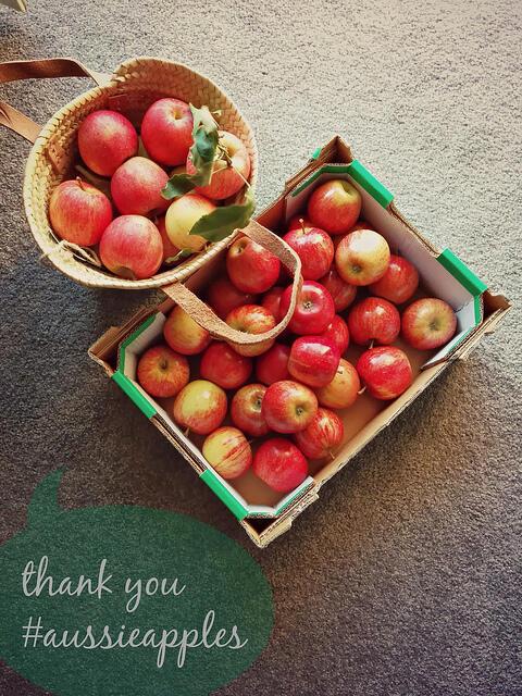 apple picking at bilpin nsw